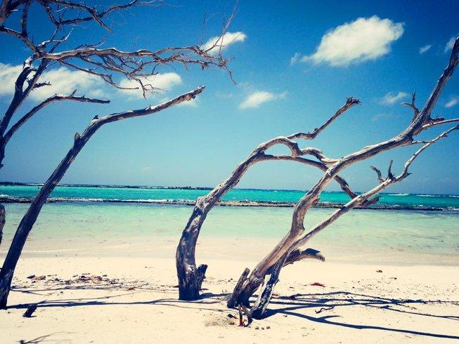 7 jours en stage de yoga dans les Caraïbes à Noord, Aruba