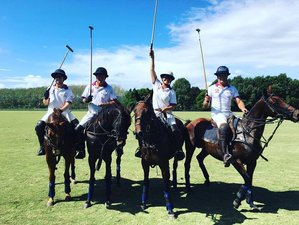 4 Day Midweek Ainsley Polo Holiday in Auckland, New Zealand