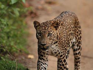 7 Days Leopard Safari in Yala National Park, Sri Lanka