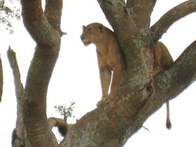 16 Days Golden Monkey and Wildlife Uganda Safari