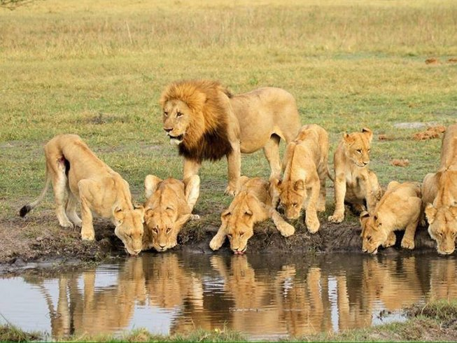 5 Days Private Safari in Serengeti National Park