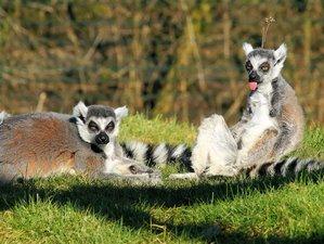 20 días de safari fascinante en Madagascar