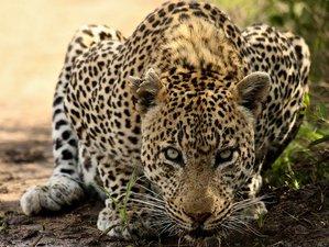 3 Days Watching the Big Five and Other Wildlife Maasai Mara Safari in Kenya