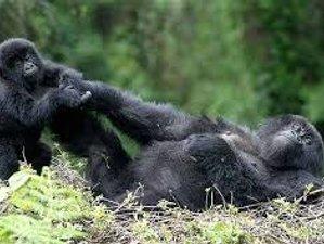 4 Days Adventurous Safari in Uganda