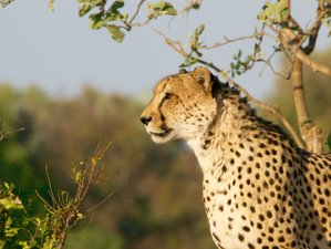 16 Days Cape Town to Kruger Park and Lesotho, Exploring The Hidden Secrets of South Africa
