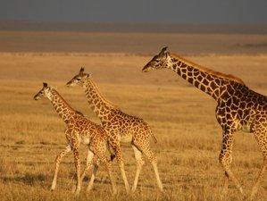 5 Days Untamed Discovery To Masai Mara, Lake Nakuru, Lake Naivasha, Hell's Gate Kenya National Park