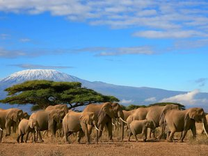 13 Days Classic Kenya Safari and Beach Holiday