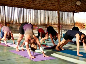 5 días de vacaciones de yoga y playa en Goa, India