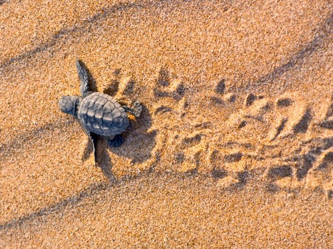 9 Days Ocean Inspired Yoga Retreat in Sri Lanka