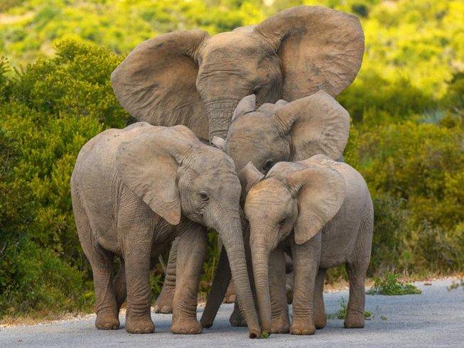 7 Days Intriguing Safari in Kenya