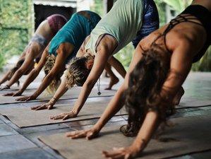 5 Day Wellness and Yoga Holiday in Canggu, Bali