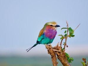 Vogelreizen