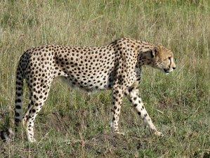 14 Days Volunteering in a Children's Home Philanthropy and Maasai Mara Safari in Kenya