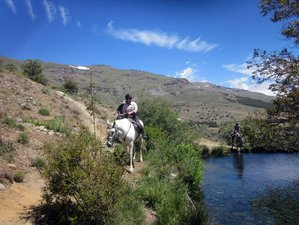 5 Day Sulayr Short Break Horse Riding Holiday in Granada, Andalusia