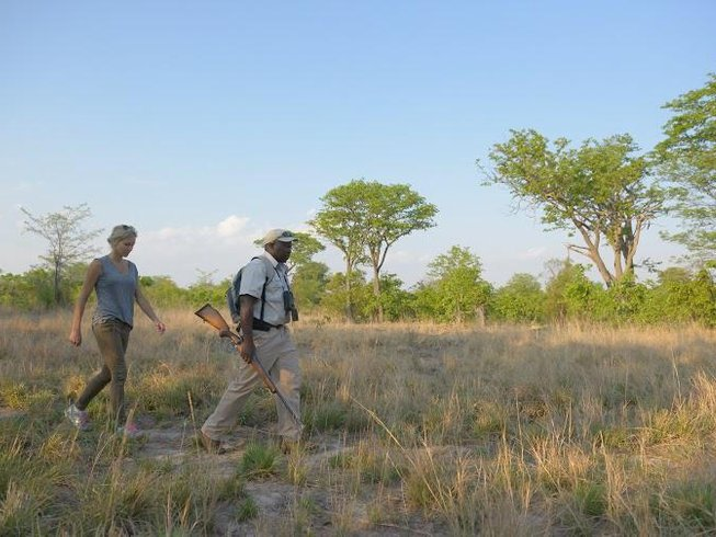7 Days Luxurious African Safari in Chobe and Hwange National Park