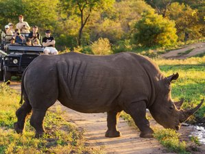 4 Days Luxury Kruger Park and Panorama Route Safari in South Africa