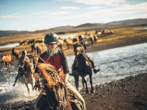 8 Day The Arctic North Horse Riding Holiday in Kerlingaskógur