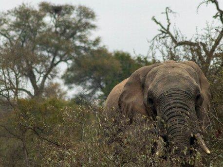 Greater Kruger Nationalpark