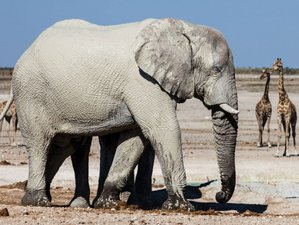 4 Days Wildlife Safari in Etosha National Park, Namibia