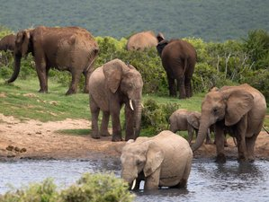 7 Days Queen Elizabeth and Lake Mburo National Park Guided Safari in Uganda