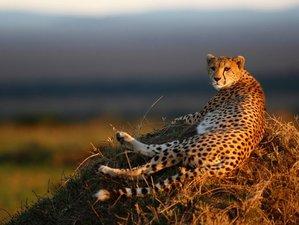 7 Days Guided Safaris Tour in Kenya