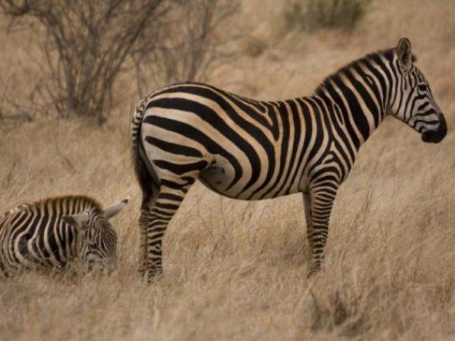3 Days Kenya Safari in Maasai Mara