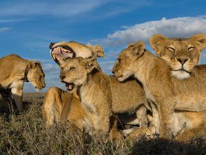 4 Days The Taste of Africa Private Safari in Northern Tanzania Suitable for First-timers