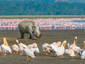5 Days Ol Pejeta Conservancy, Lake Nakuru, and Maasai Mara Safari in Kenya