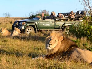3 Days Remarkable Budget Safari South Africa
