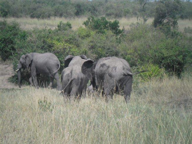 3 Days Maasai Mara National Reserve Safari in Kenya