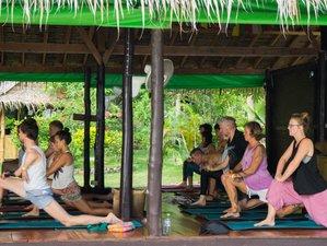 12-Daagse Basis van een Yogacursus in Koh Phangan, Thailand
