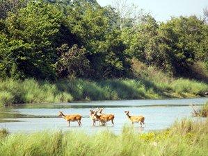 7 Days Jungle Wildlife Tour in Bardiya National Park, Nepal