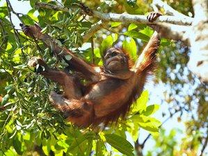 2 Day Selingan Turtles Island and Sepilok Orangutan Tour in Sabah, Malaysia
