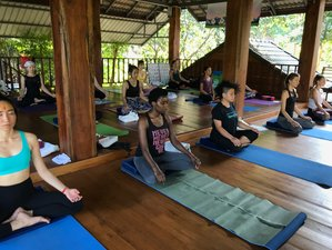 7 Days 50 Hours Hatha and Ashtanga Vinyasa Yoga Teacher Training in Chiang Mai, Thailand