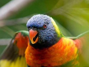 2 Days Bird and Reptile Parks Tour in Bali