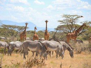 4 Days Tarangire, Lake Manyara, and Ngorongoro Crater Safari in Tanzania