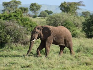 7 Days Tanzania Great Migration Highlights from Arusha