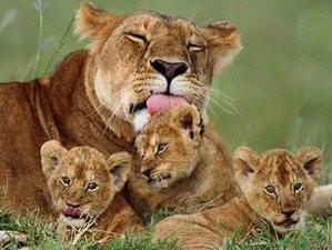 6 Days Private Safari in Kenya
