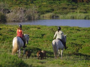 8 Days Wolf and Wild Horse Territory Horse Riding Holiday in Peneda Gerês National Park, Portugal