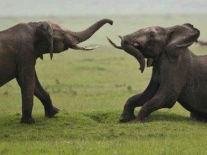 7 Days Tarangire, Serengeti, Ngorongoro Crater, and Lake Manyara Wildlife Safari in Tanzania