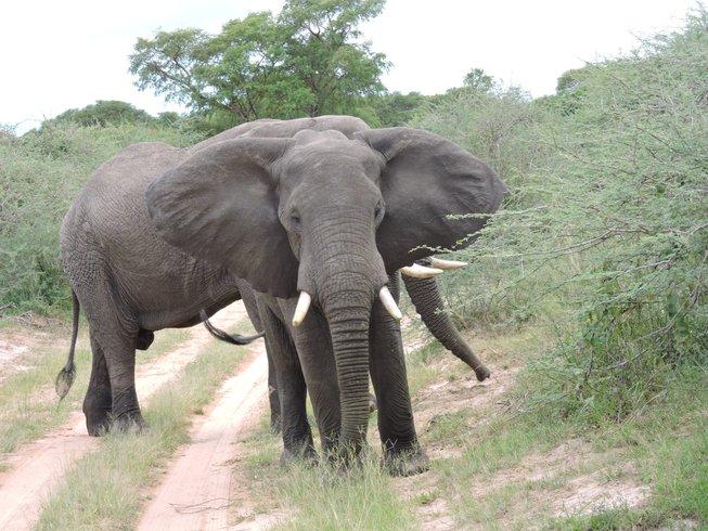 5 Days Fascinating Gorilla Safari Uganda