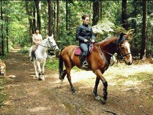 7 Days Field Horse Riding Holiday in Styria, Slovenia