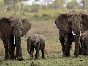 7 Day: Join Safari -  Lake Manyara, Tarangire, Serengeti and Ngorongoro Crater