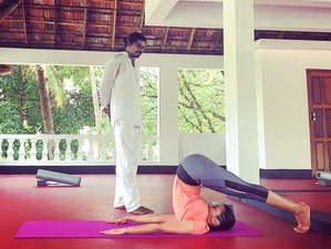 8 Day Ayurvedic and Yoga Rejuvenation Retreat in Kerala