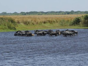 7 Days Great Migration Safari in Liuwa Plains National Park, Zambia