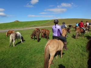 7 Days Golden Circle Horse Riding Tour in Southern Region, Iceland