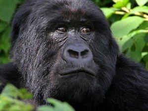 10 Days Go Mountain Gorilla, Chimpanzee Tracking and Wildlife Game Viewing Safari in Uganda
