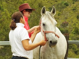 4 Days Midweek Horse Riding Holiday in Lockyer Valley, QLD, Australia