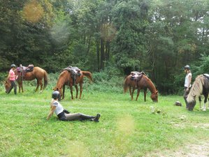 4 Days Wildlife Experience Horse Riding Holiday in Bac, Slovenia