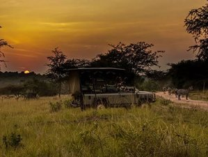 10 Days Unforgettable Wildlife Safaris in East Africa